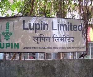 Lupin