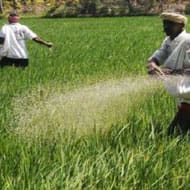 Indian Fertilizer: Neutral outlook for urea sector by ICRA