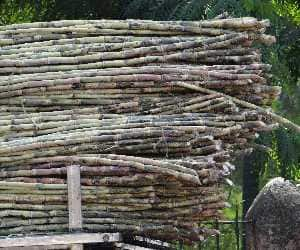 Sugar futures may trade on mixed to negative note: Angel