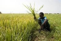 'Change India' pins initiatives to transform india's agri