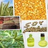 Buy Jeera, Refined Soy oil on dip: Geofin Comtrade
