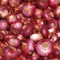 Onion prices rise to Rs 40/kg, govt to import 10,000 tonnes