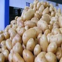 Govt fixes potato MEP at $360/tonne