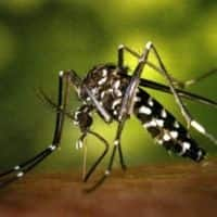 HC seeks details of funds released for dengue control