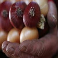 Govt cuts onion MEP to $ 400 per tonnne in exports boost
