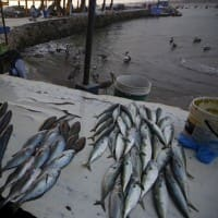 Odisha sets seafood export target at Rs 20,000 cr in 5 years