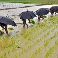 Monsoon rains cover half of India; to accelerate sowing