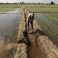 Budget 2016: Farmers look to FM for details of revamped crop insurance scheme