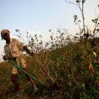 No interest subsidy on crop loan beyond Rs 3 lakh, says panel