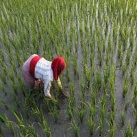 Govt sees better agri output this year on hopes of good monsoon