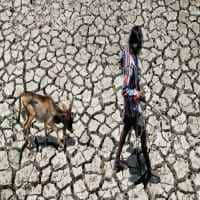 Ease burden of loan repayment on drought-hit farmers: Assocham