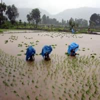 Monsoon ends this week, record food output likely