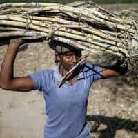 India rules out lowering sugar import tax for now: Govt source