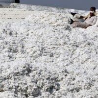 Expect Cotton futures to trade sideways to down: Angel Commodities