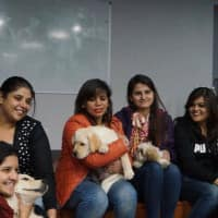 Canine comfort: This startup provides healing paws to keep away the blues