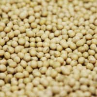 Expect Soybean prices to trade sideways to higher: Angel Commodities