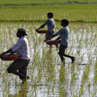 Farm loan write-offs win votes in India, but may hurt economy
