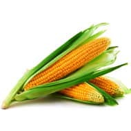 United States maize ratings were the best in 20 years because of warm weather and