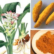 Turmeric to trade in 6632-6892 range: Achiievers Equities