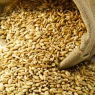 Continuous import of Wheat may force wheat prices