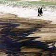 80% Chennai oil spill clean-up operation completed: Govt