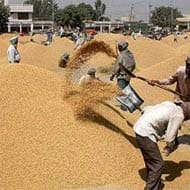 Haryana sees record paddy procurement at 53.24 lakh mt